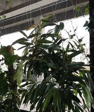 aménagement plante